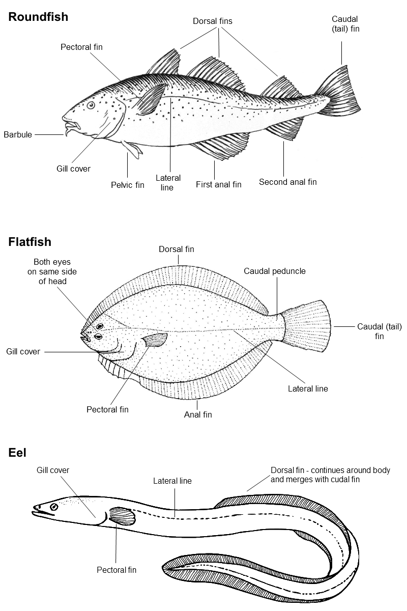 hight resolution of fish species labelled diagrams