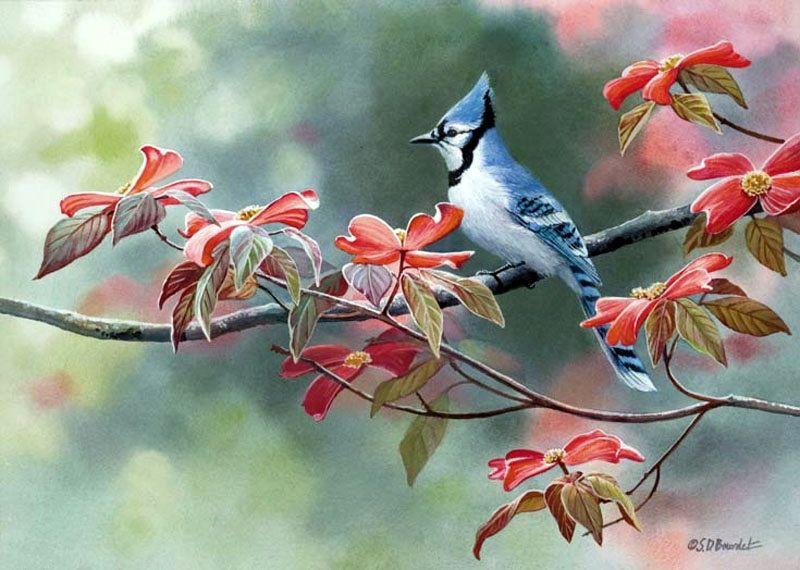 花鸟画|艺术家 Susan Bourdet - 湾仔网站