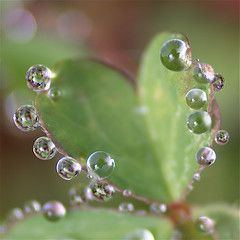 Heart of diamonds | Flickr - Photo Sharing! Dew drops on a heart shaped leaf (hva)