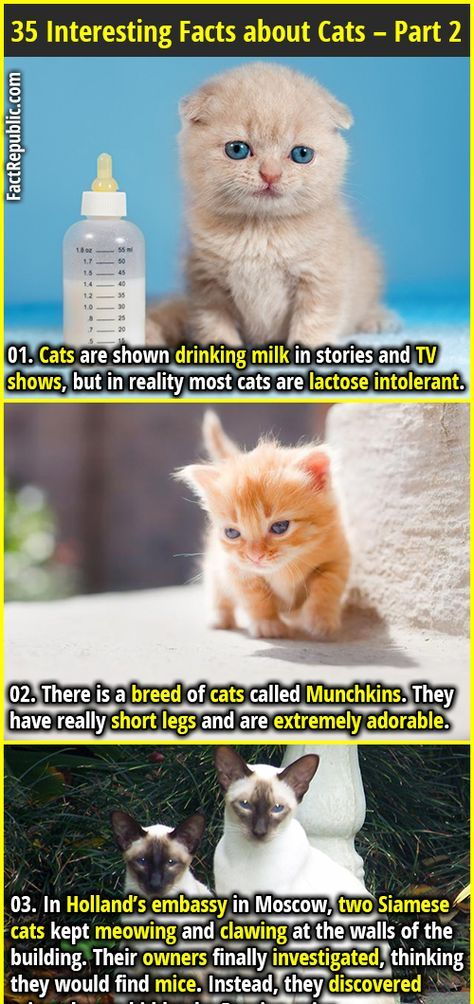 35 Interesting Facts about Cats Part 2 Fact Republic