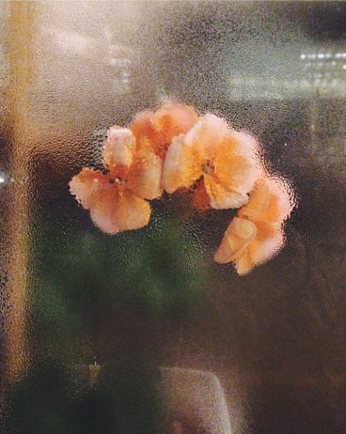 marigolds against a window