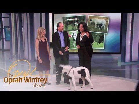 Meet Einstein, the World's Cutest Miniature Horse | The Oprah Winfrey Show | Oprah Winfrey Network - YouTube