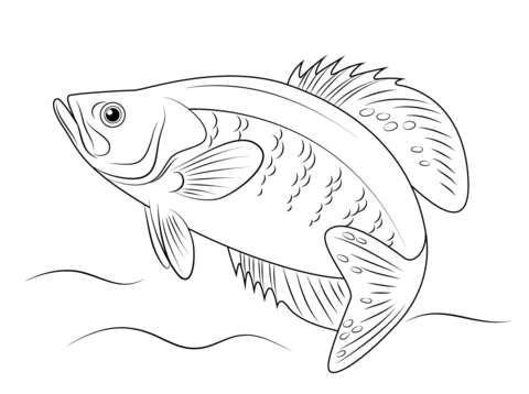 fish coloring pages free coloring pages - Free Fish Coloring Pages Printable