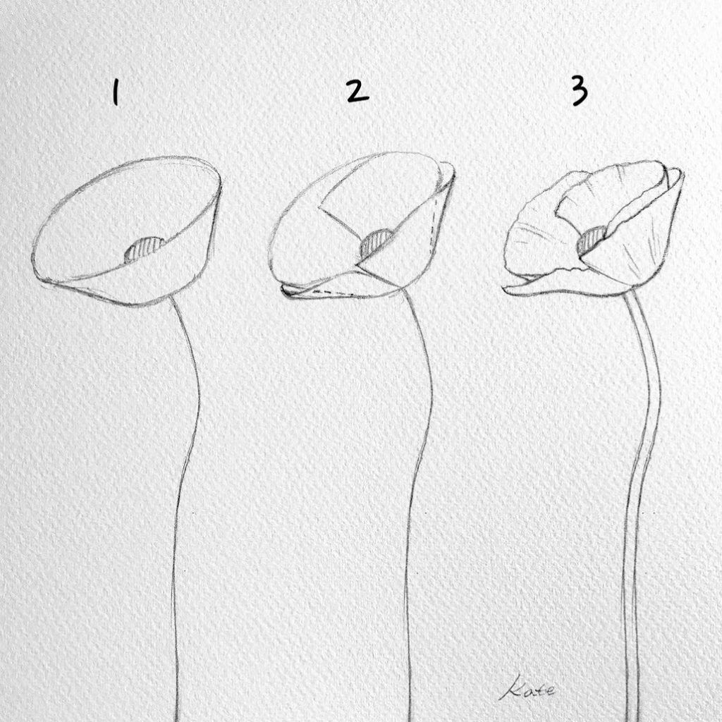 How to draw flowers step by step for beginners   how to draw ...