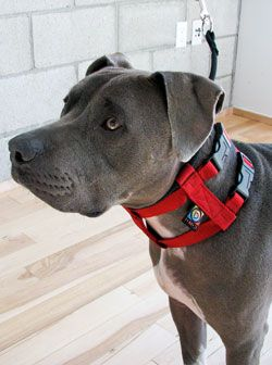 The Illusion Dog Collar Leash System
