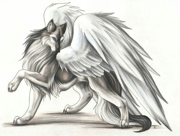 My Wolf With Wings Awesome DrawingsCool