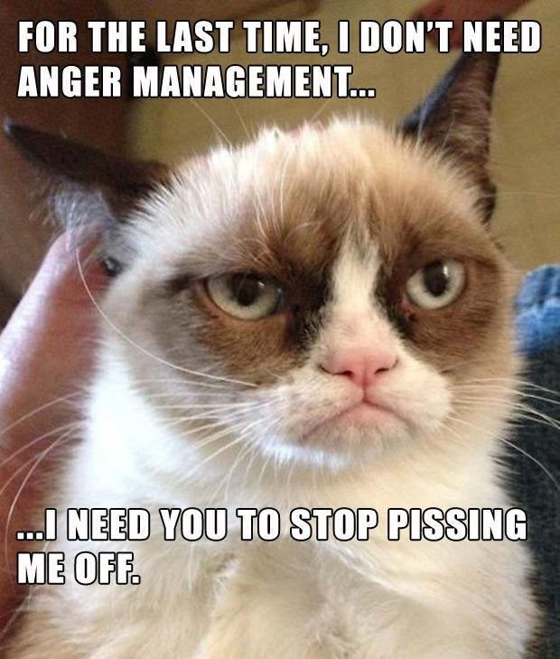 For The Last Time I Dont Need Anger ManagementI NEED YOU TO - 17 cats that are angry grumpy and fed up with everything