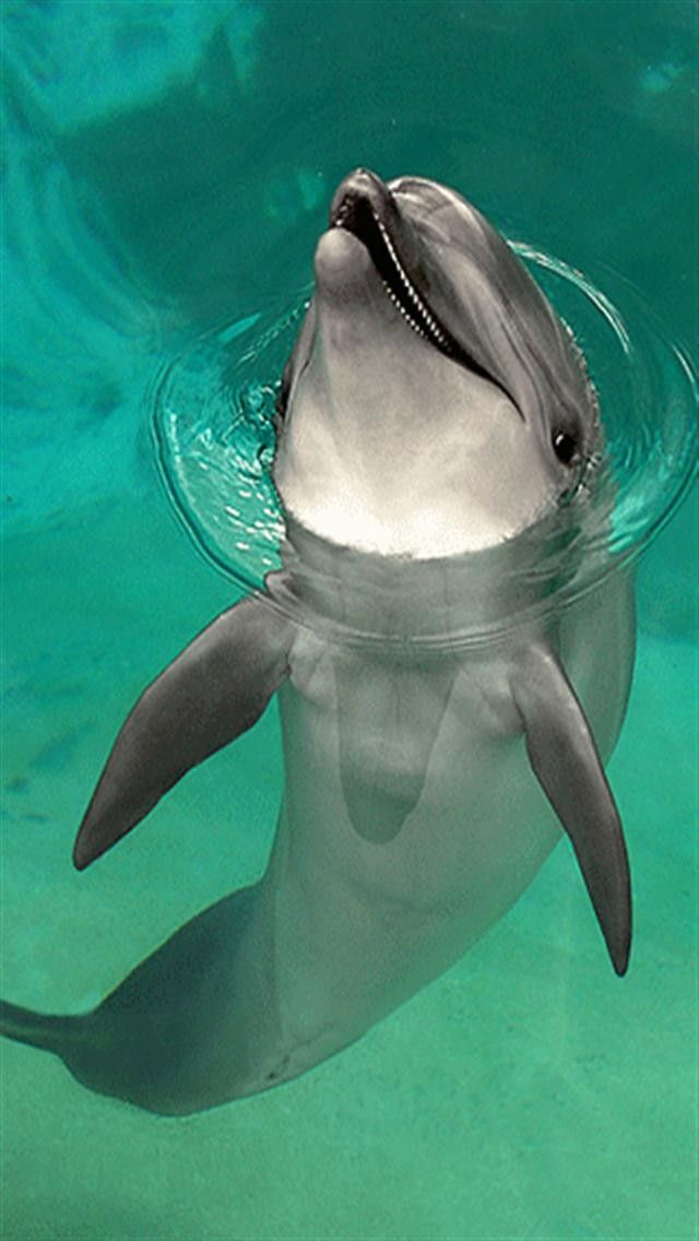 Happy Dolphin Animal iPhone Wallpapers, iPhone 5(s)/4(s
