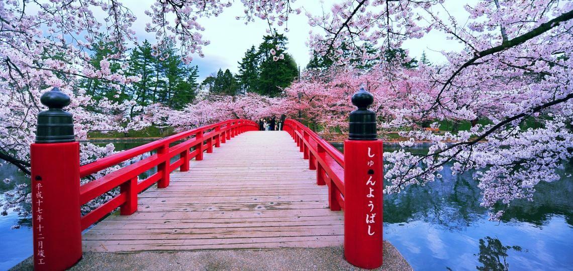 reise japan kirschbl te hanami tokio sakura bridge. Black Bedroom Furniture Sets. Home Design Ideas