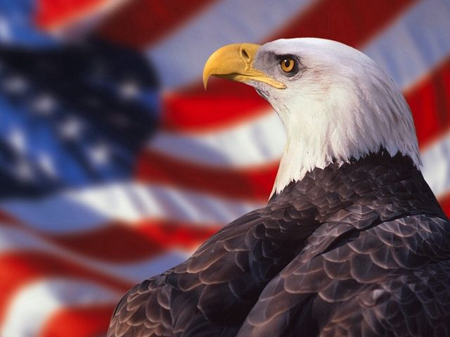 Eagle Patriotic Backgrounds American Bald Eagle Eagle Wallpaper Bald Eagle