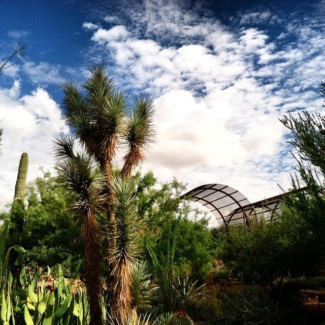 View from Desert Discovery Loop Trail of the Cactus and Succulent Galleries after rain storm.