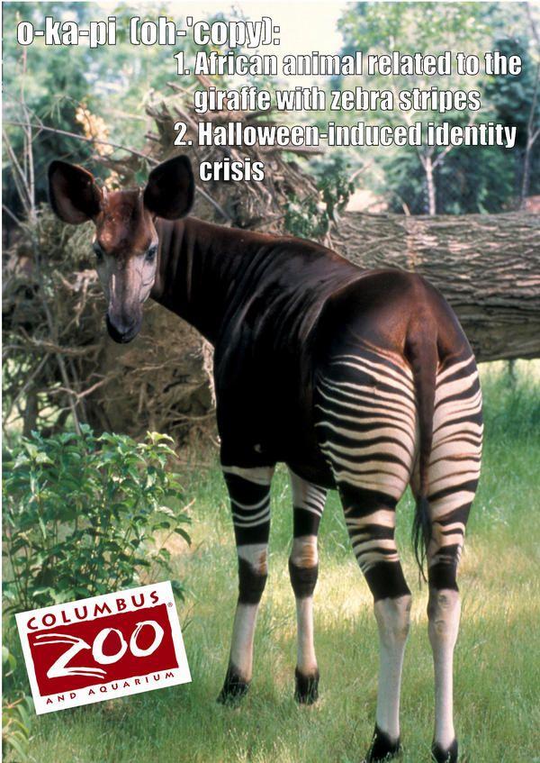 Columbus Zoo (ColumbusZoo) on Twitter | Animal Lover