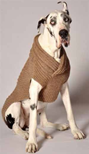 Big dogs deserve nice sweaters too. Cable Knit Shawl Collar Ragg Wool Dog Sweater. Get busy @Kristen Arbuco Hasbrouck says Mia!