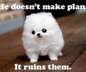 cute animals with cute sayings by ksybrantarmstrong on We ...