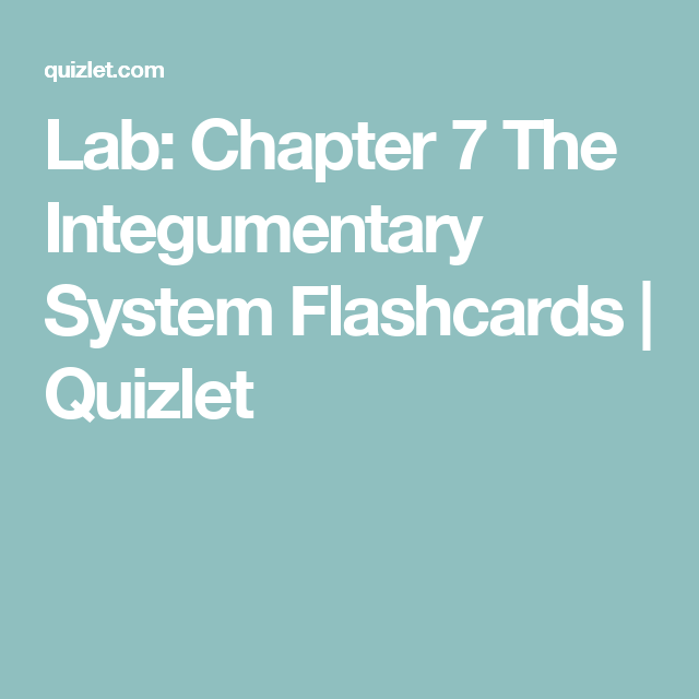 Lab Chapter 7 The Integumentary System Flashcards Quizlet
