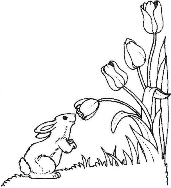 Tulips A Cute Little Bunny in