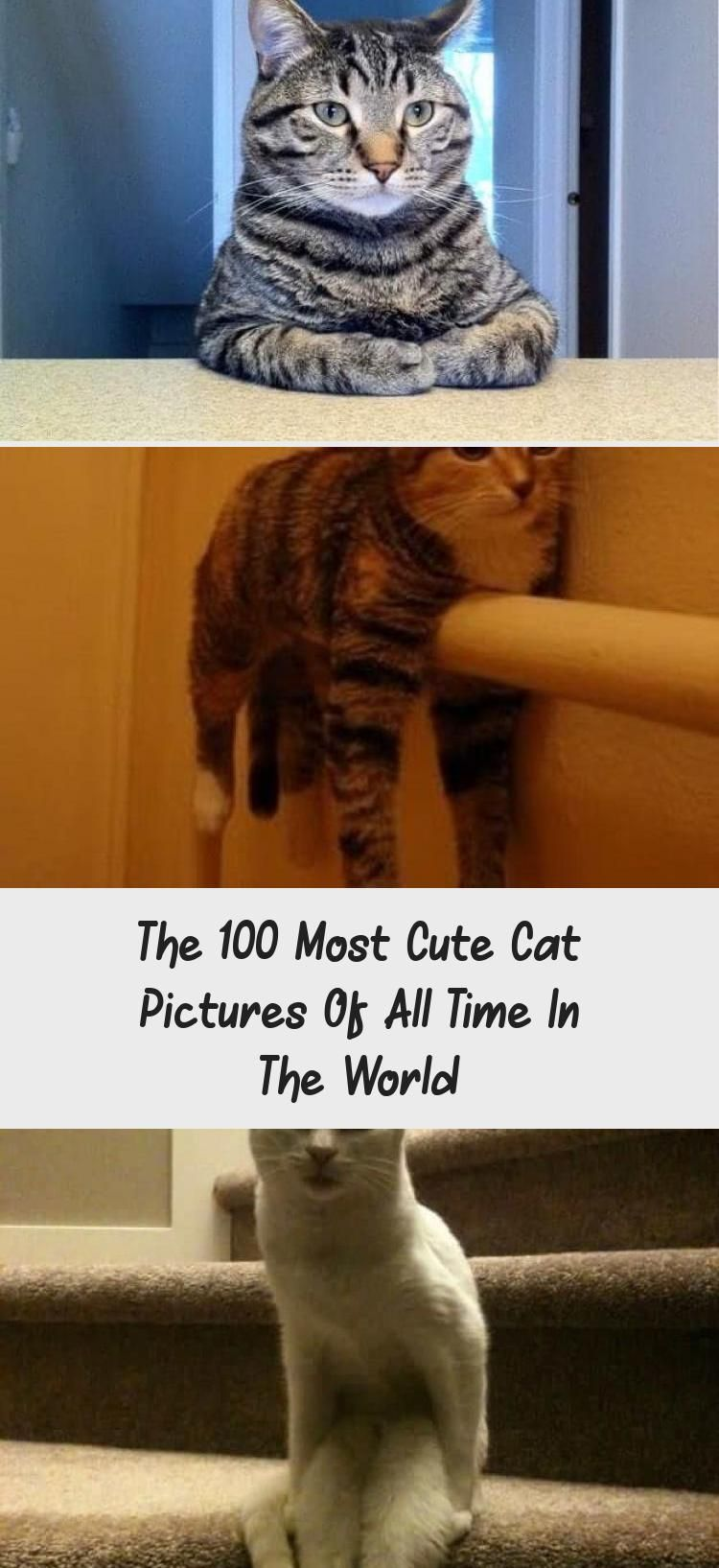 The 100 Most Cute Cat Pictures Of All Time In The World Humor Whitekittens Squeeeee White Kitten Licks Window Kitty Memes Cat Humor Funny Joke Gato Chat 2020