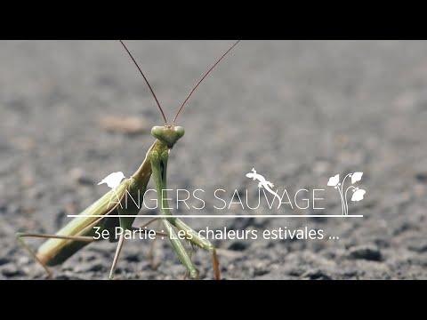Documentaire Nature Angers Sauvage Partie 3 Chaleurs Estivales Youtube En 2020 Documentaire Estival Chaleur