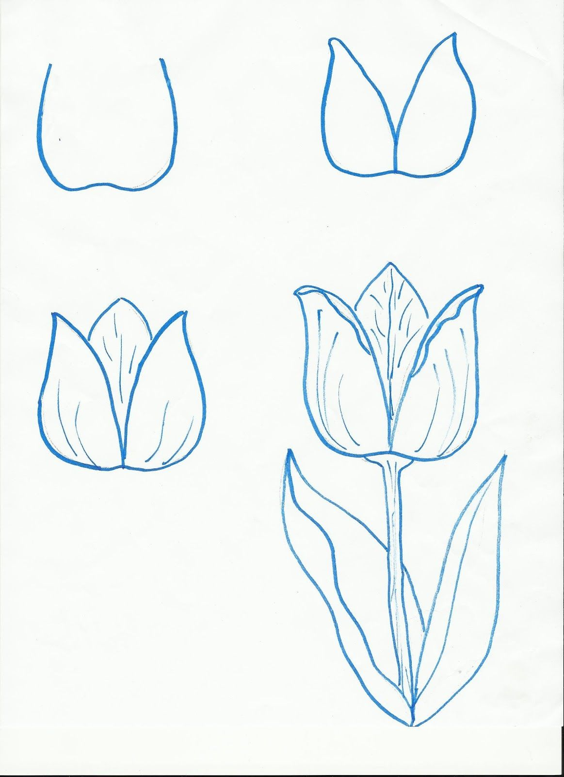 Uncategorized Step By Step Drawings Of Flowers drawing a flower art pinterest alternative and nice tulips step by step