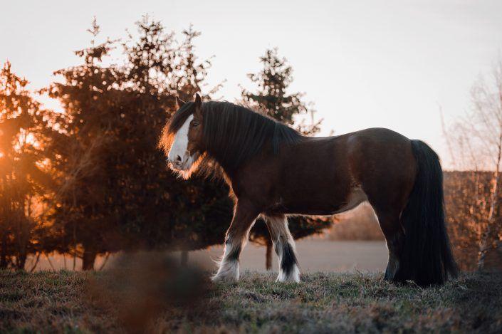 Fotos Pferde In Der Natur I Anna Ibelshauser Pferde Pferde Wallpaper Pferde Fotografie