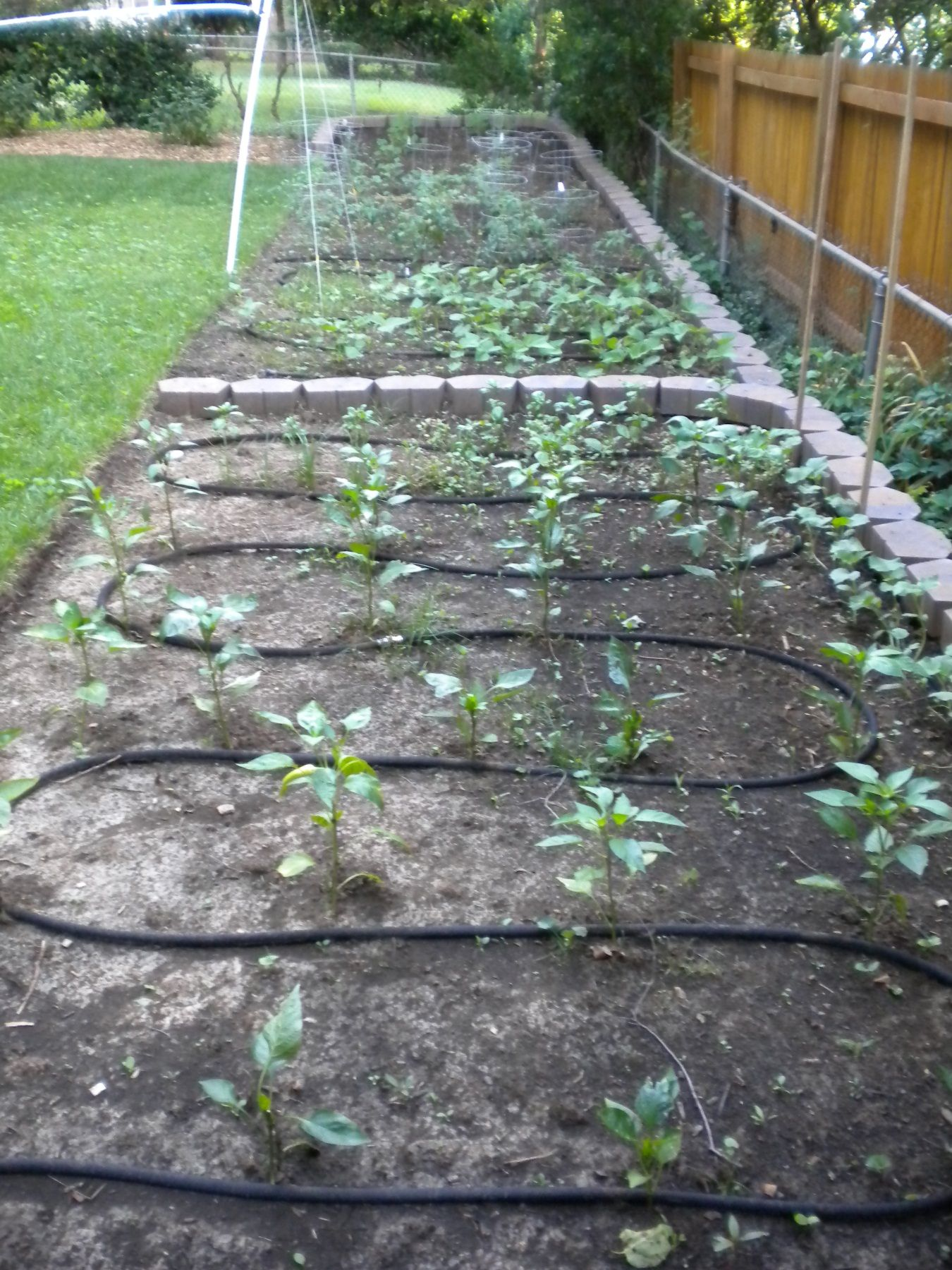 images about Irrigation on Pinterest Gardens Raised beds