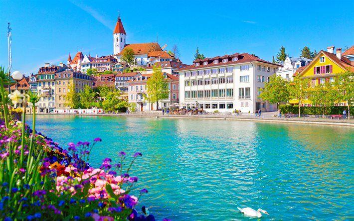 Descargar fondos de pantalla Thun, el Verano, el cisne blanco, Suiza, Río Aare