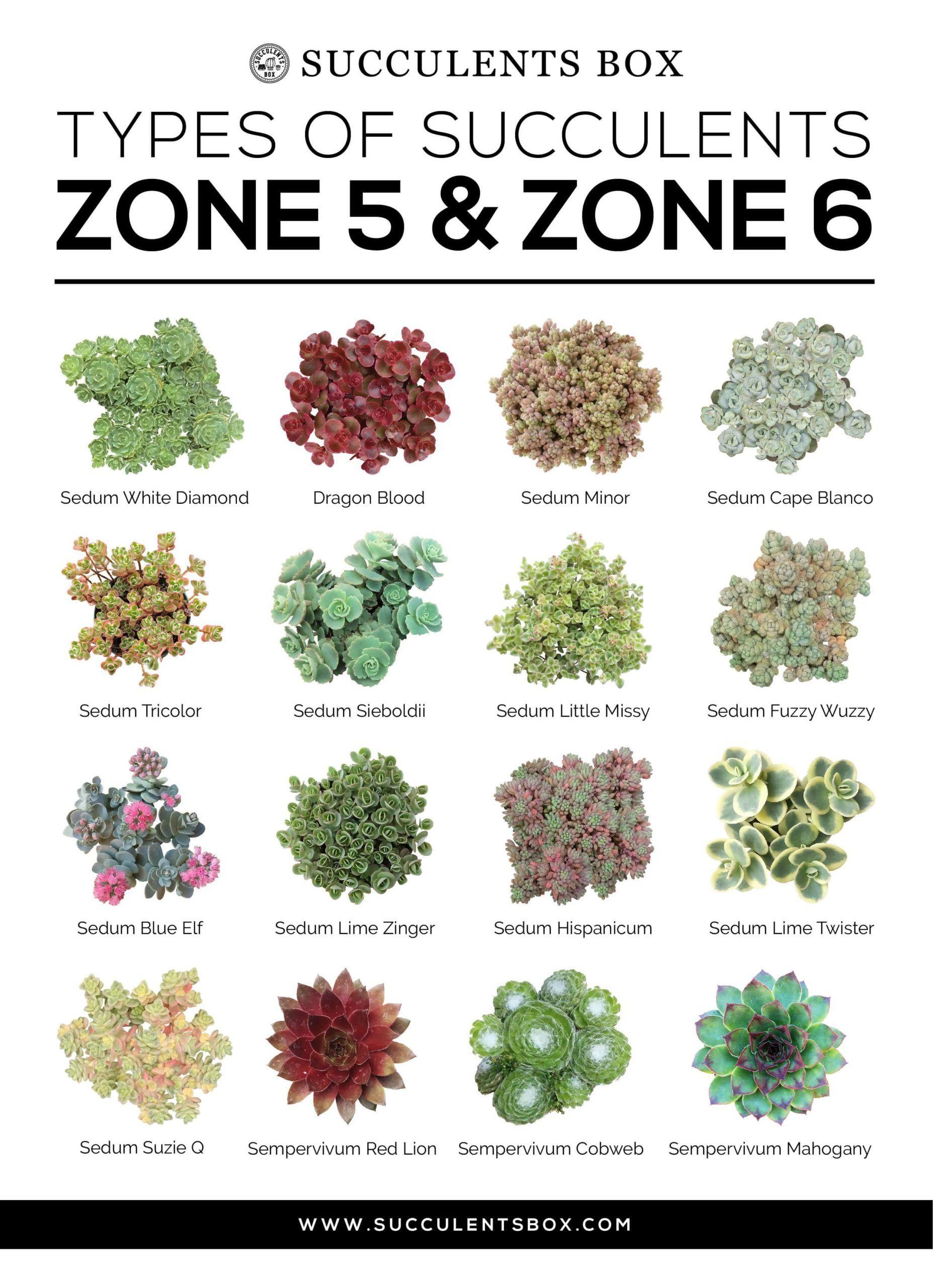 8e0143bb2b59eebe32df3481a43558bb - What Gardening Zone Is Minnesota In