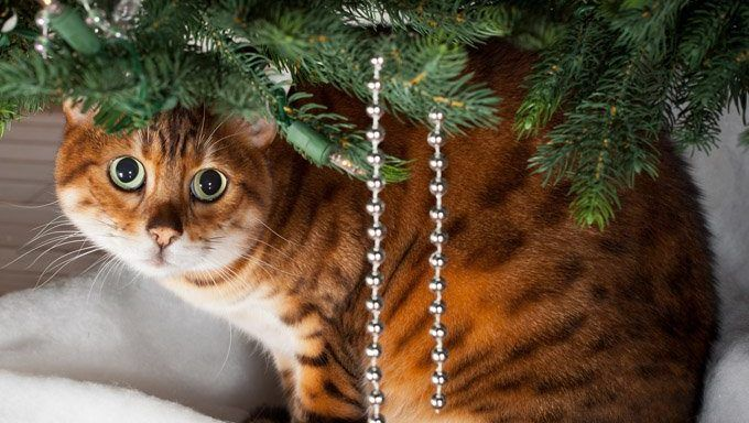 4 Creative Ways To Cat Proof Your Christmas Tree Cat