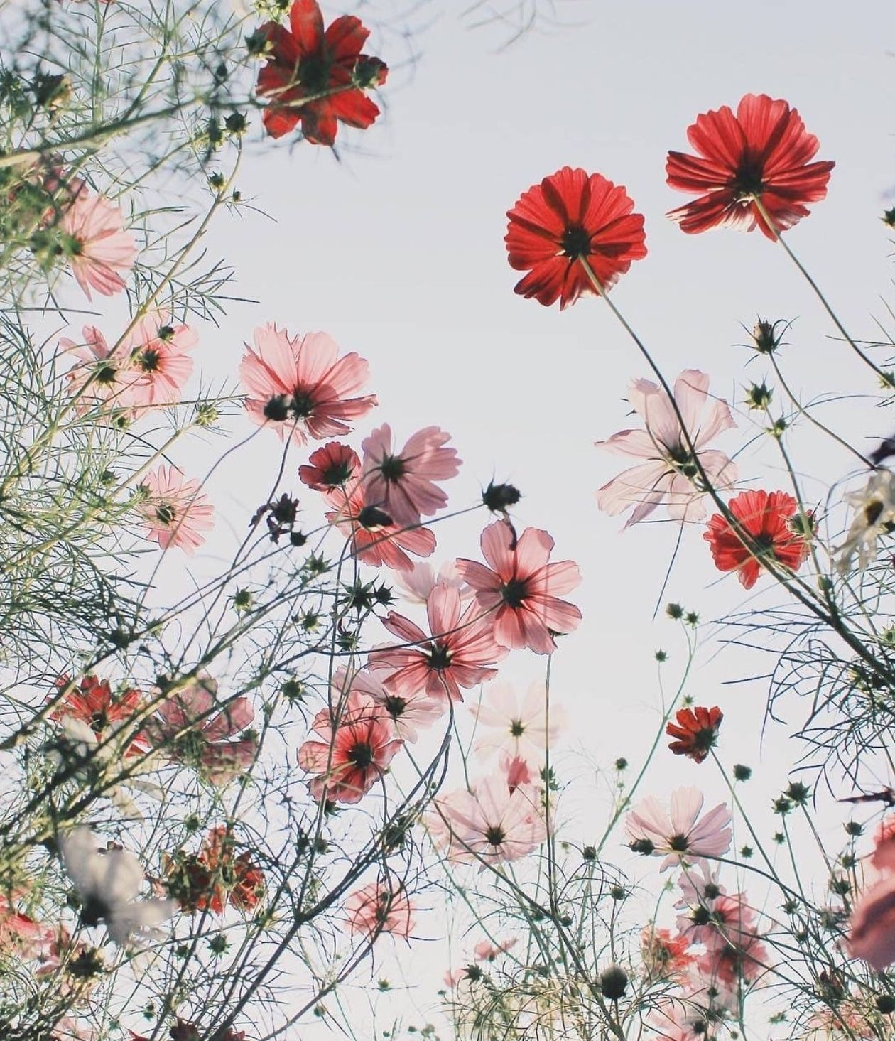 P I N T E R E S T 910lilyy Flower Iphone Wallpaper Sunflower Wallpaper Floral Wallpaper