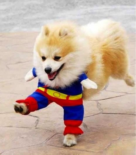 16 Cute And Adorable Dogs Dressed Up As Superheroes Animals
