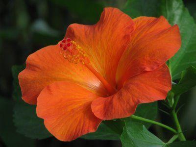 Google Image   orange flower  hoeandshovel.com