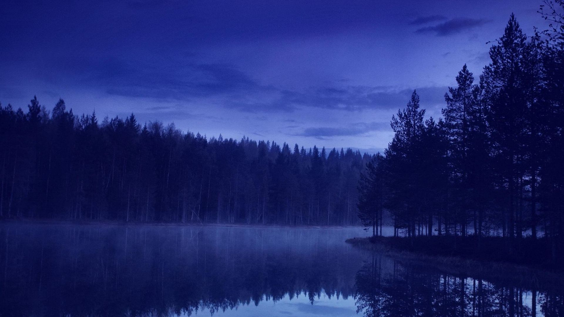 Night Forest Google Search Magic In The Woods Pinterest