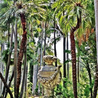 Love the antique Italian urn with the contrast of the palm trees.