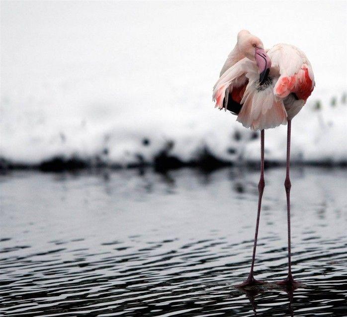 مجموعه اخرى من صور حيوانات جميله و مضحكه عاليه الوضوح Animal Photography Animals Your Spirit Animal