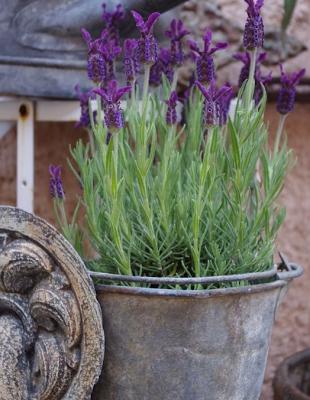 jolies id es r cup pour le jardin cabanes fleurs jardin et pots pinterest jardins. Black Bedroom Furniture Sets. Home Design Ideas