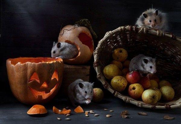 La mignonne Invasion des Hamsters de Elena Eremina (18)