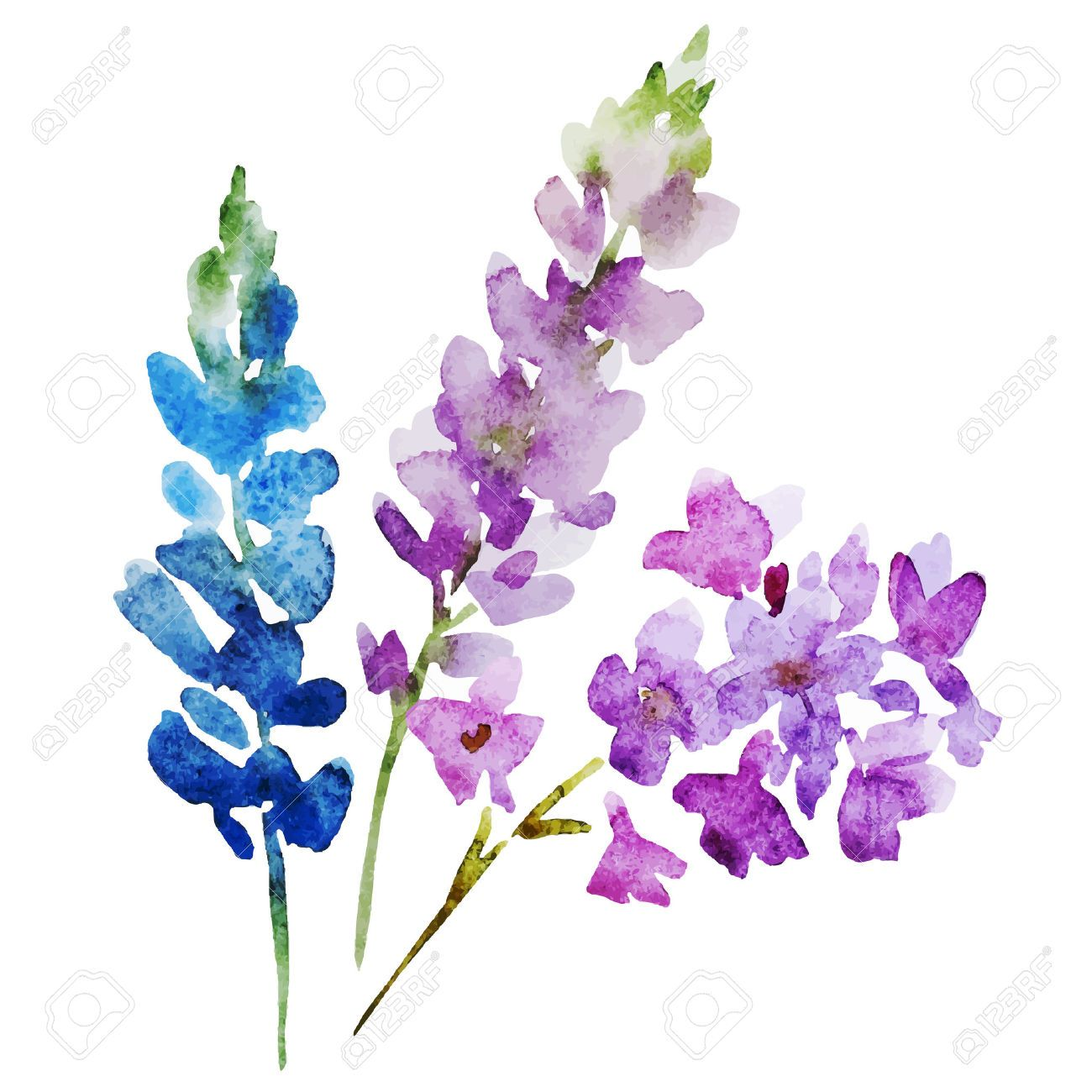 Image Result For Watercolor Flowers Watercolor Flower Vector