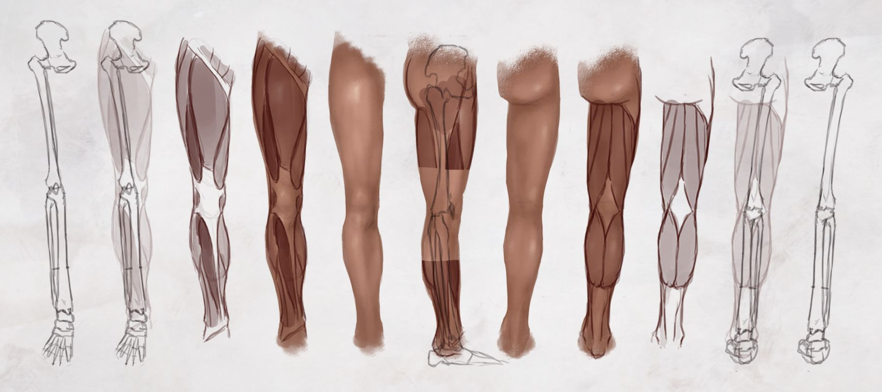 Anatomy Study: Drawing the Legs   Concept Cookie   Anatomy   Hips ...
