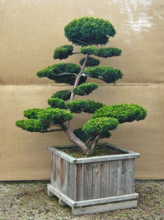 bonsai baum garten, hiller - ihr garten in form | bonsai tree | pinterest | garten, Design ideen
