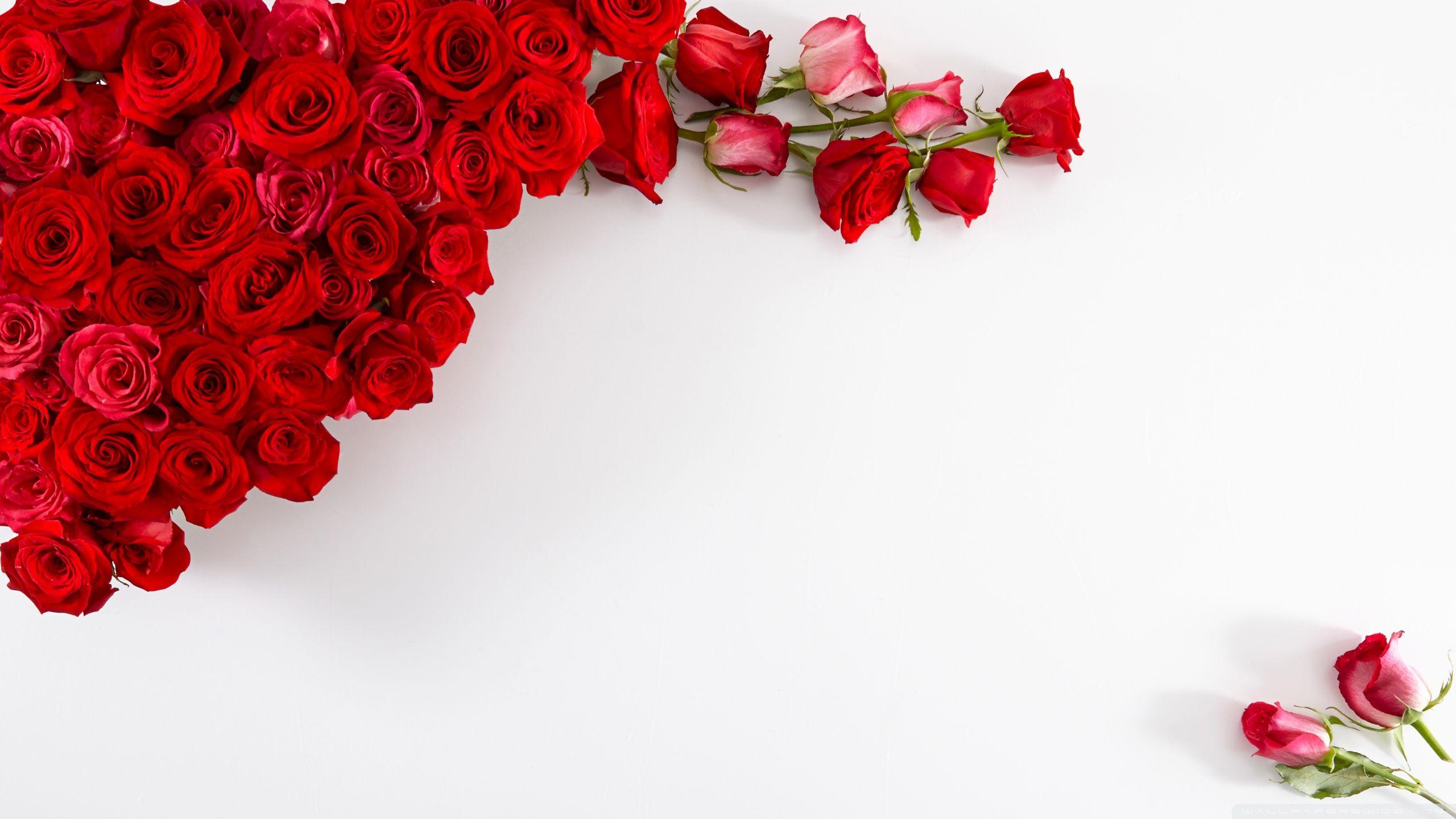 Открытка с розами на белом фоне