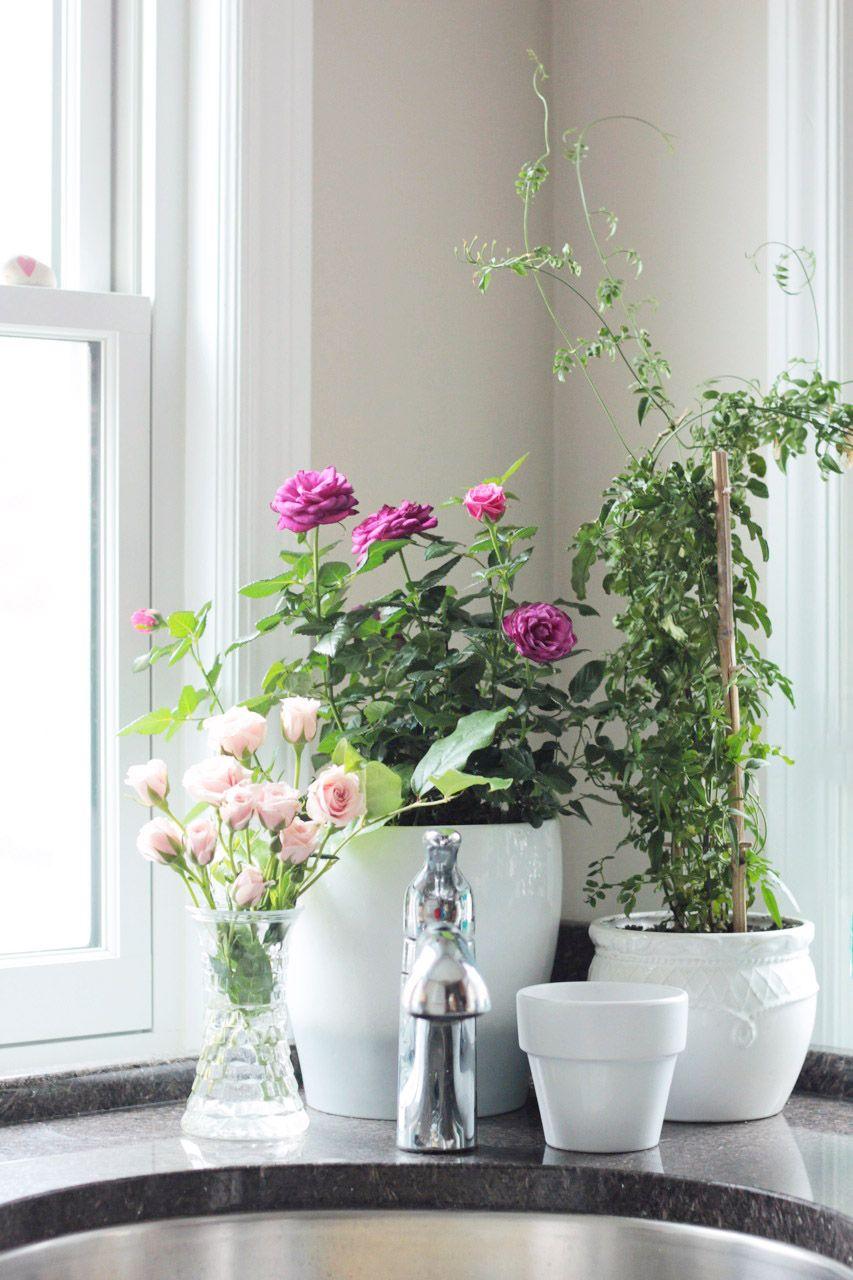 Roses and jasmine crab+fish houseplants B L O O M I N