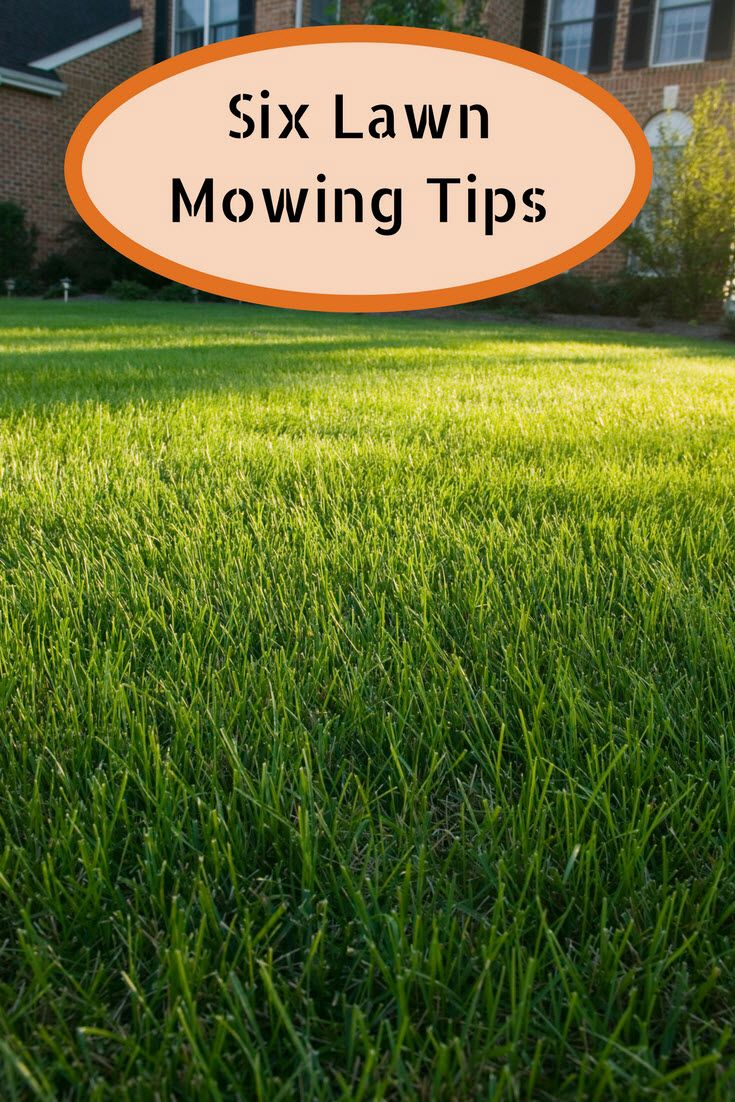 Article Headline Summer Lawn Care Lawn