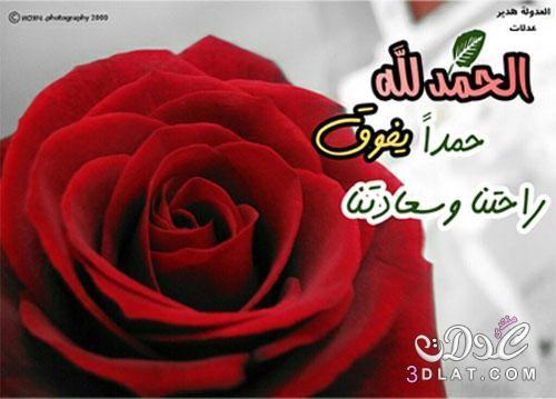 من تصميمى صو دينية للفيس بوك صو اسلامية 2017 اجمل الصور الدينية صور اسلامية جميلة 500 X 359 60 Plants Rose