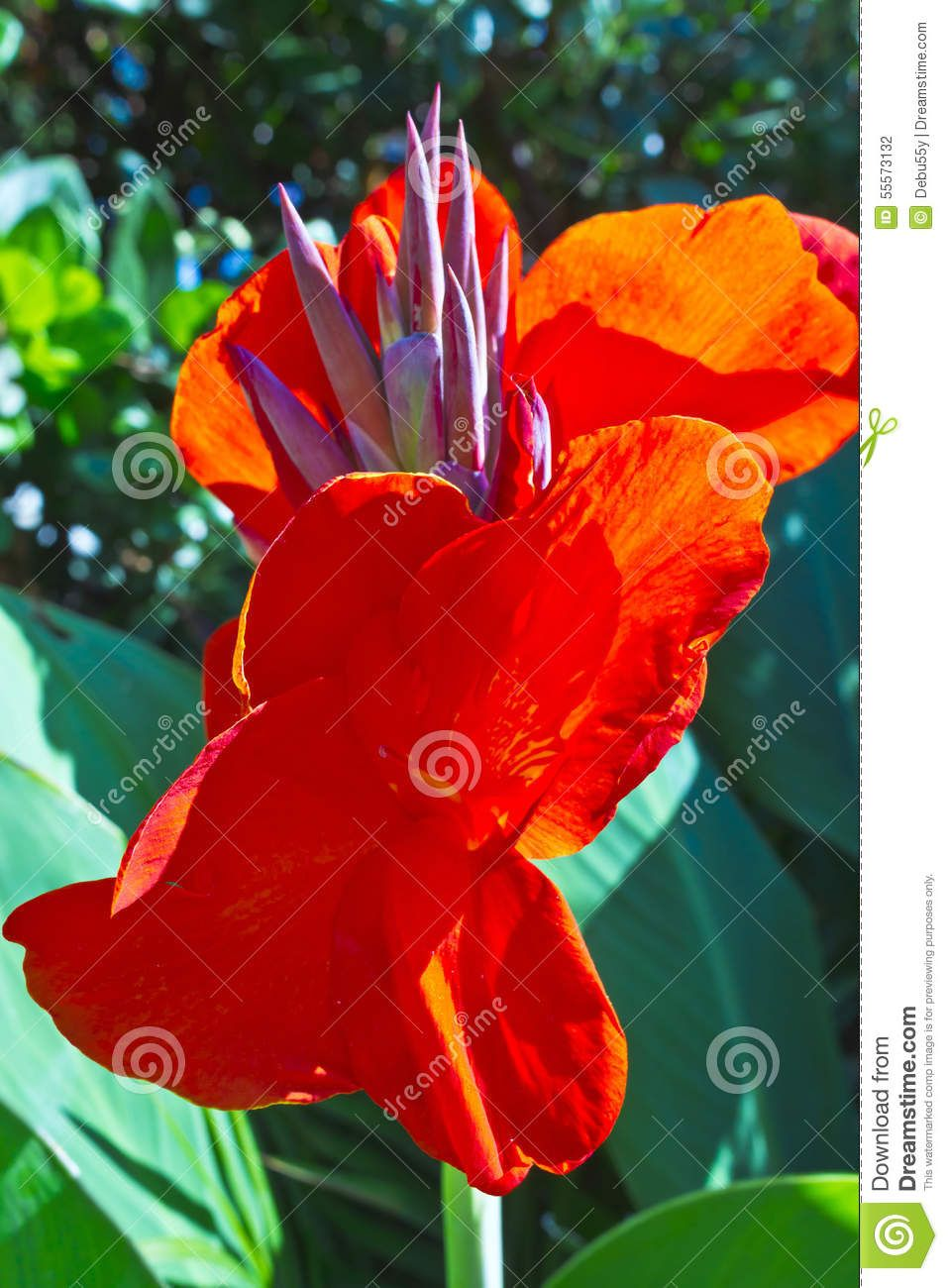 Tall Red Tropical Flowers. Stock Photo - Image: 55573132 | flowers ...