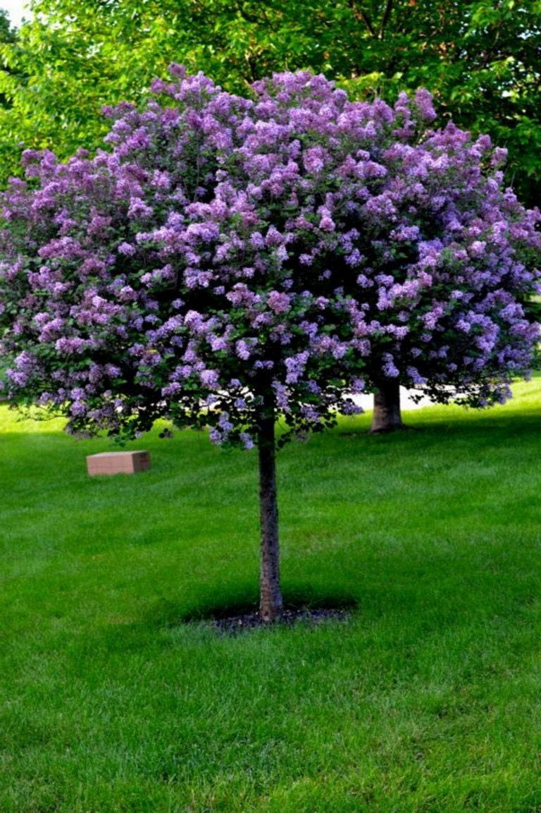 Piccoli Alberi Da Giardino pin di marco mango su alberi da giardino (con immagini