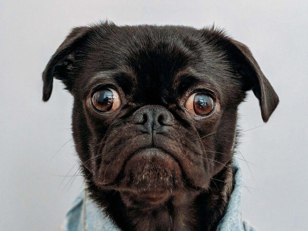 Persona Webflow Html Website Template Top Dog Names Dog Names