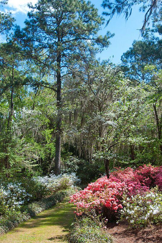 8e071de2c7f80829f8ef351438818de0 - Maclay Gardens State Park Tallahassee Florida