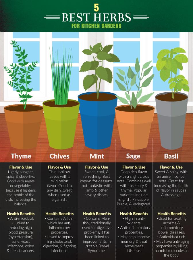 How to Grow an Herb Garden | Outdoor | Herb garden in ...