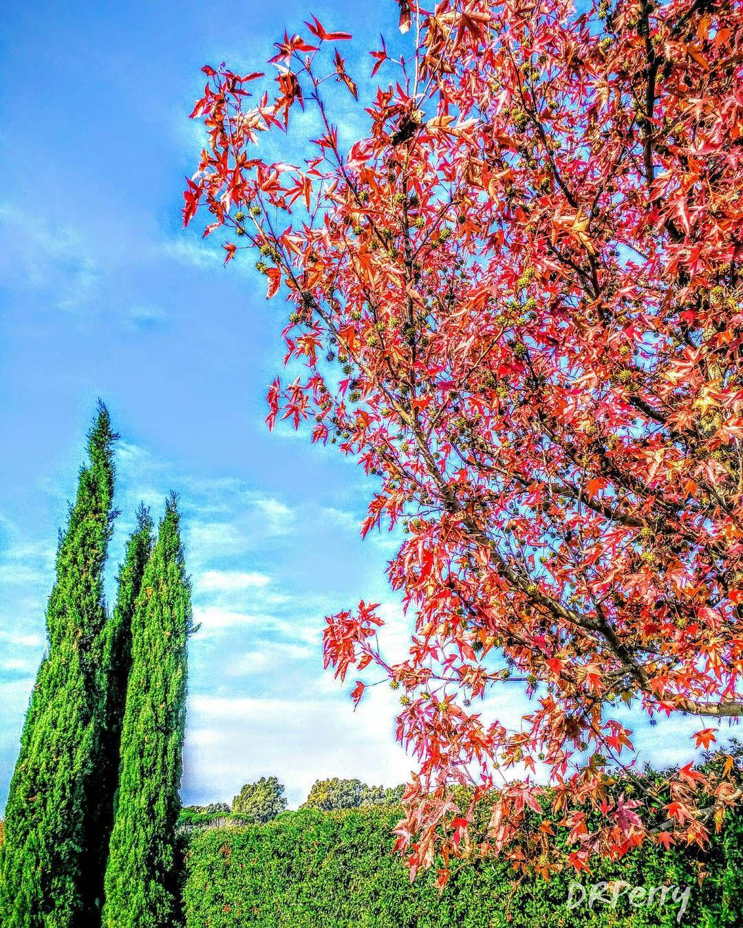 """""""Autunno Romano""""  #fb ##wp #rome #roma #italy #italia #tree #fall #repostromanticitaly #autunno #autumn #amazing #photobydperry"""