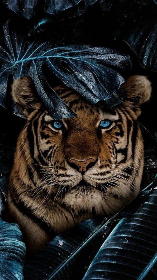 Pin By Pricesita On Wallper Animals Animal Photography Wildlife Animal Photography